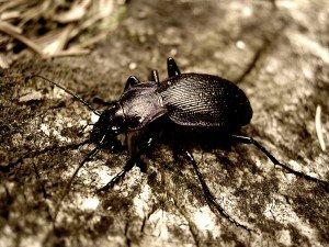 Ne m'écrasez pas... dans Lectures scarabee-300x225